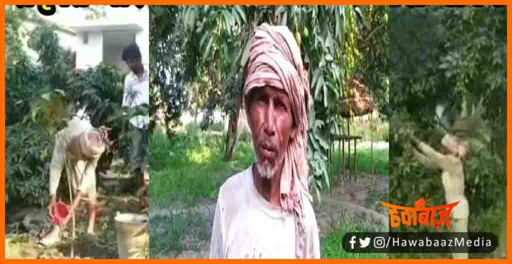 Tree Man, Damodar Sharma, Bihari Tree Man, is admi ne 30 hazar ped lagayen, Man Planted 30 thousand tree, how to plant a tree, Free tip, Bihar hindi news, Real Hero, Salute the hero,