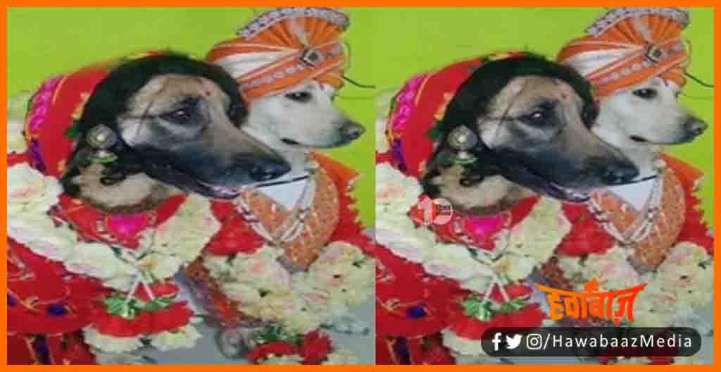 Kutte ki Shadi, Kutte ki anokhi shadi, Kutte ki shadi ka viral video, Viral Video, Kutte aur kutiya ka vivah, Viral news, Viral story, Anokh ishadi, Bihar news , Bihar lettest news
